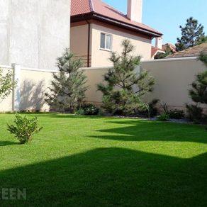 рулонный газон одесса