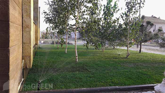 Рулонный газон и автополив