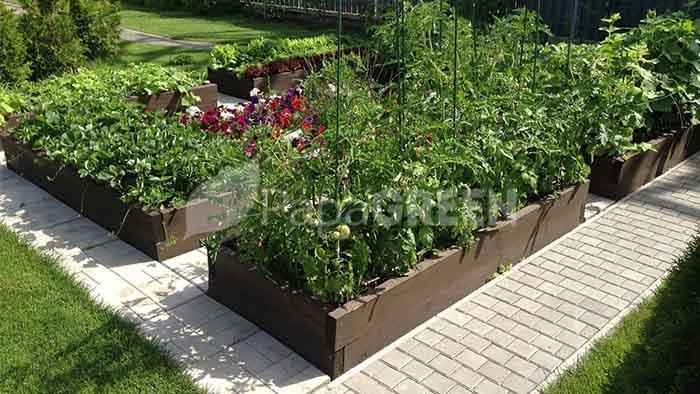 огород и система капельного полива